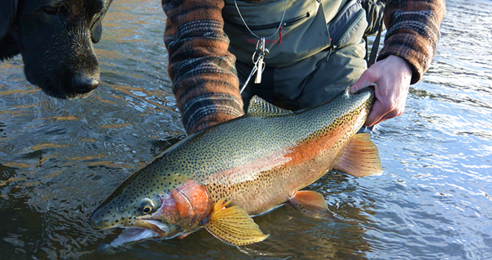 Animas Valley Anglers